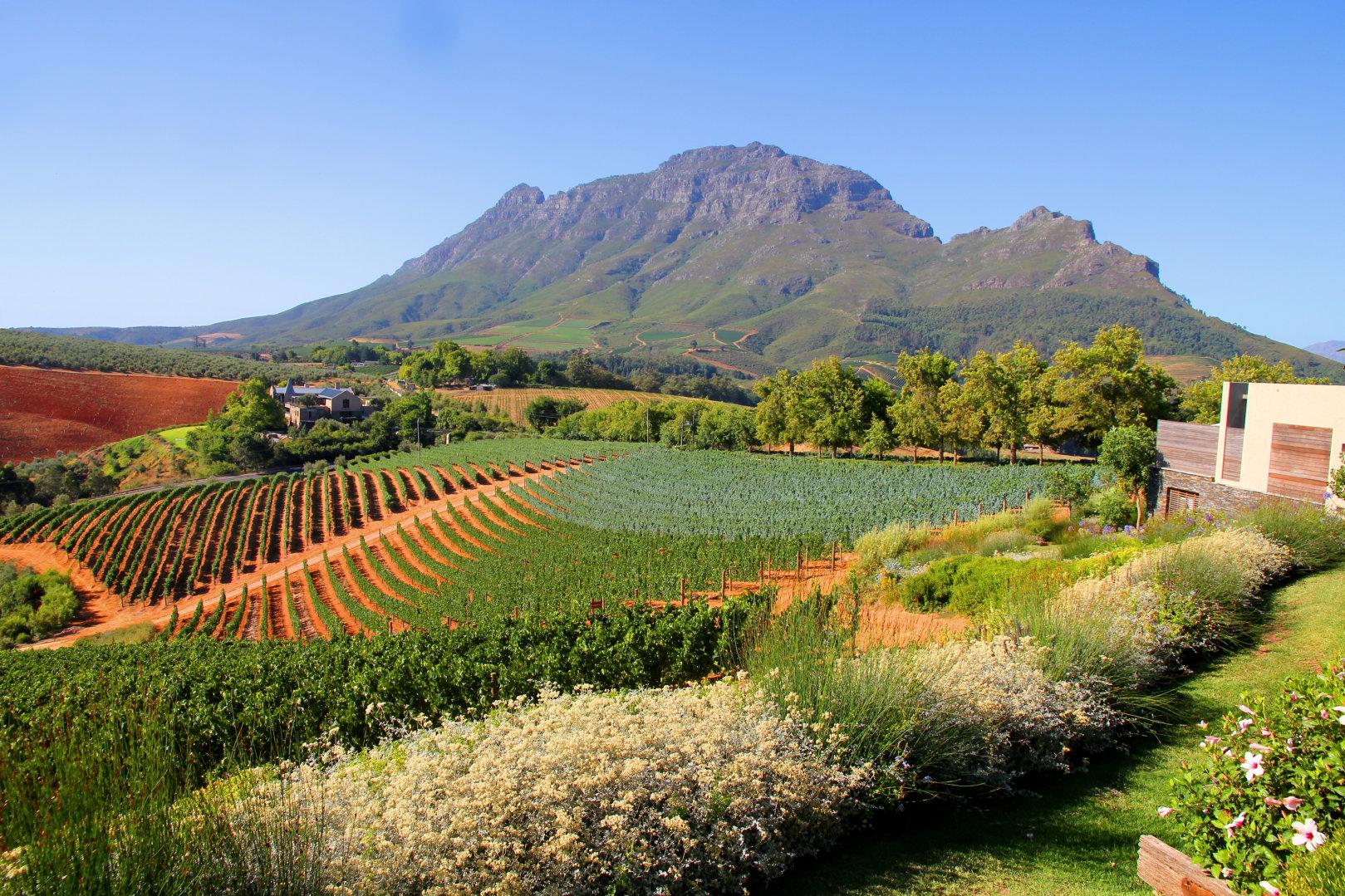 Diamanthandlerens sør-afrikanske viner? Jo, de skinner