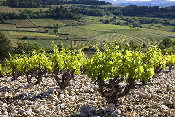 Anvendelig rødvin? Det er Côtes du Rhône, det.