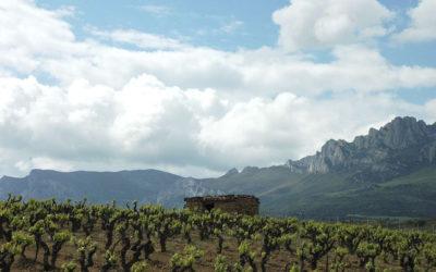 Cune med moderniserte Riojaviner til påskelammet