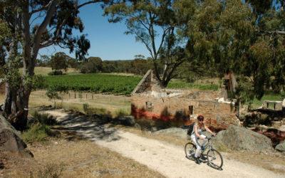 100 gode viner fra Vinmonopolets marsnyheter