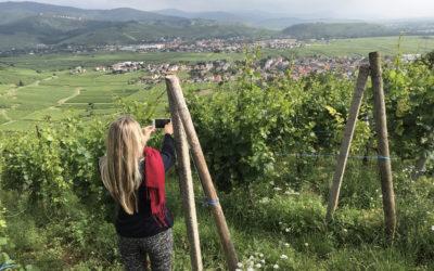 Ostertag lager toppviner fra Alsace