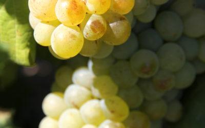 Denne sørafrikanske vinen er oppkalt etter et norsk polarskip